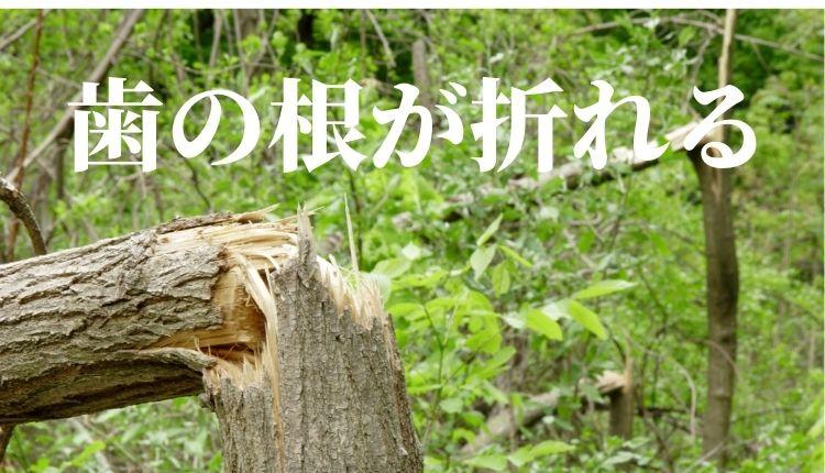 SASHIBAMAEBANO.jpg