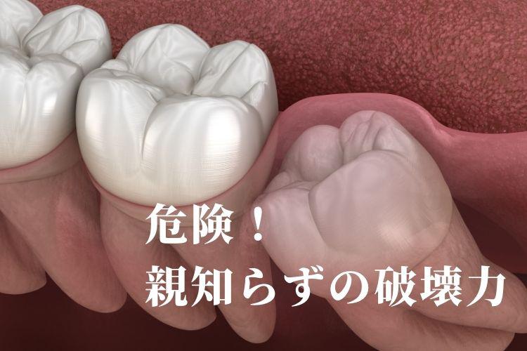 hakaioyashirazu.jpg